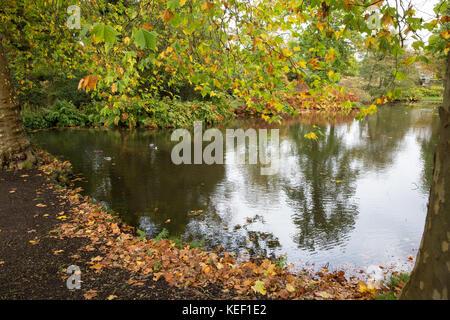 Savill Garden, Englefield Green, UK. 20th Oct, 2017. Autumn colour around a lake at Savill Garden in Windsor Great - Stock Photo