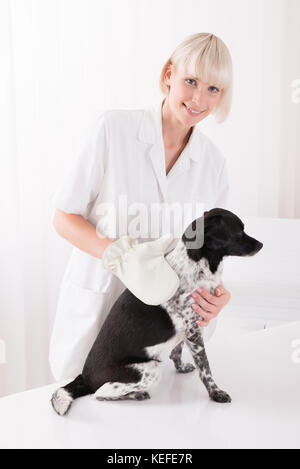 Happy Young Female Veterinary Examining Dog In Clinic - Stock Photo