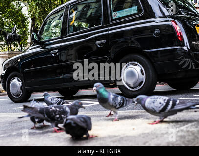 Typical London scene of black cab going past & pigeons eating food on the pavement - Stock Photo