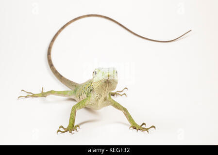 monkey facing sideways stock photo 68649059  alamy