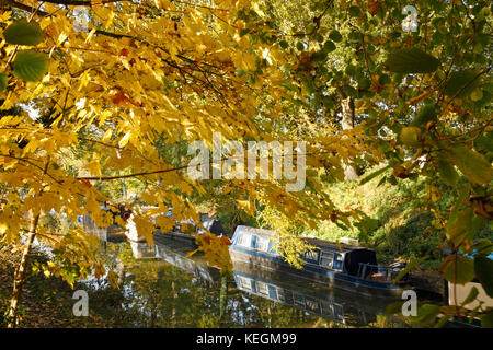 Brightly coloured autumn leaves overhanging the Kennet and Avon Canal near Pewsey. - Stock Photo