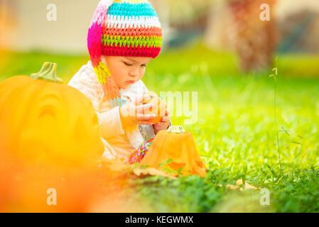 Cute baby playing with decorative Halloween pumpkins on fresh green grass in backyard, enjoying traditional American - Stock Photo