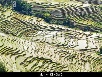Yuanyang Rice Terraces, Yunnan - China - Stock Photo
