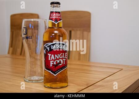 Badger Brewery Tangle Foot ale bottle with pint glass on table - Stock Photo