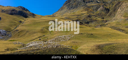 Mountain sheep and goats in Val de Tena at Formigal in Spanish Pyrenees mountains, Spain - Stock Photo