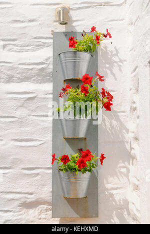 Vertical wall planter of small flowering plants outside on a white wall in Greece - Stock Photo