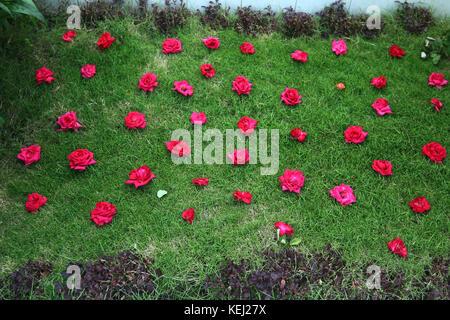 Dhaka Banani Graveyard - Stock Photo