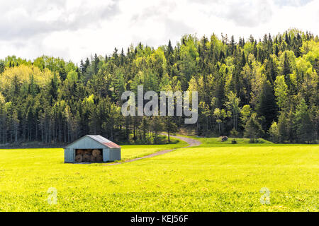 Open field meadow with grass in countryside summer with road going up hill through forest and shed stocked with - Stock Photo