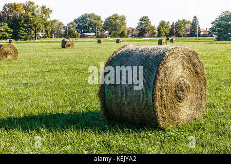 Late Summer hay bales in a green pasture and field I - Stock Photo