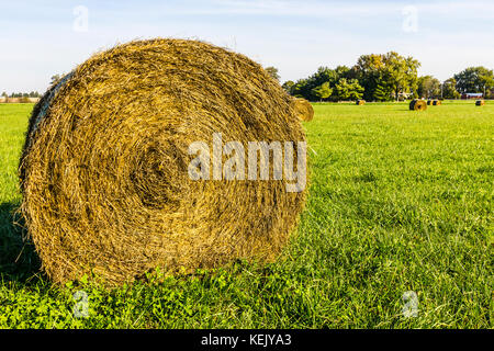 Late Summer hay bales in a green pasture and field II - Stock Photo
