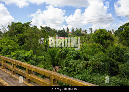 Dominica Republic Punta Cana Greenery - Stock Photo