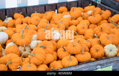 Decorative mini pumpkins for sale at an outdoor farmer's market in the fall - Stock Photo