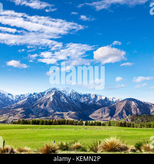 Canterbury New Zealand landscape, with tussock, pasture, sheep, mountains and blue sky. - Stock Photo