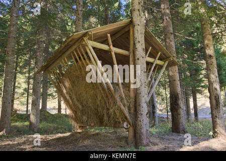 Feed menger in the forest - Stock Photo