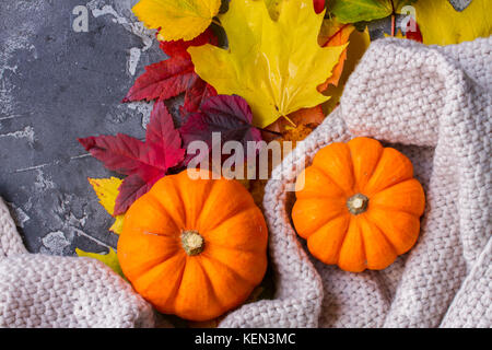 Thanksgiving pumpkins with fall leaves in cosy knitted blanket close up - Stock Photo