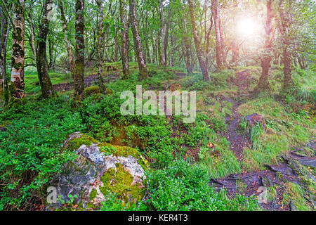 Undergrowth beneath trees at Glendalough in Wicklow National Forest Park - Stock Photo