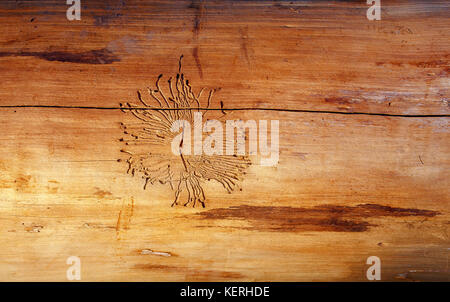 wood-worm structure in wood. Wood background. - Stock Photo