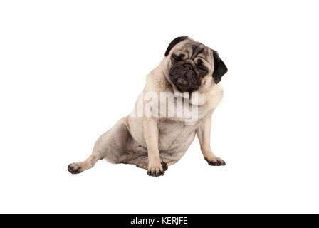 funny cool cocky pug puppy dog, sitting down with funny facial expression, isolated on white background - Stock Photo