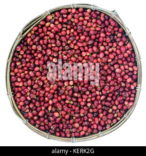 Red Coffee Beans Ripening in bamboo basket containing, picked red ripen arabica coffee berries cherries and ready - Stock Photo