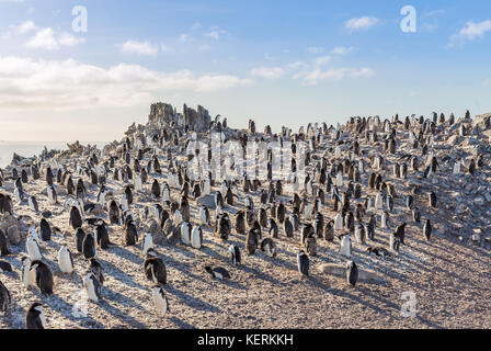 Hundreds of chinstrap penguins gathered on the rocks and enjoying the sun, Half Moon Island, Antarctic - Stock Photo