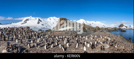 Antarctic panorama with hundreds of chinstrap penguins crowded on the rocks with snow mountains in the background, - Stock Photo