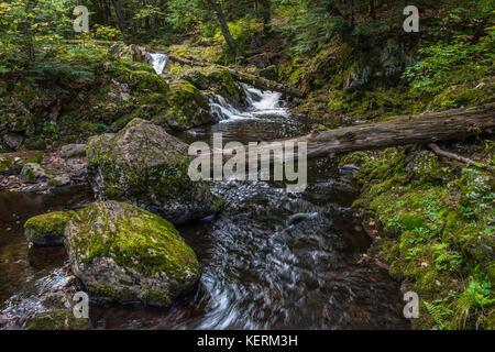 Little Carp River, Porcupine Mountains Wilderness State Park, Michigan  USA by Bruce Montagne/Dembinsky Photo Associates - Stock Photo