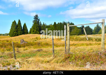 Beautiful surreal country pastoral scene with open field beyond a wooden fence.  Evergreens are in the background. - Stock Photo