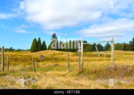 Beautiful surreal country pastoral scene with open field beyond a wooden fence.  Evergreens are in the background - Stock Photo