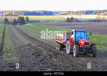 PAIMIO, FINLAND - OCTOBER 21, 2017: Sugar beet harvest in Finland with a Massey Ferguson farm tractor and trailer - Stock Photo