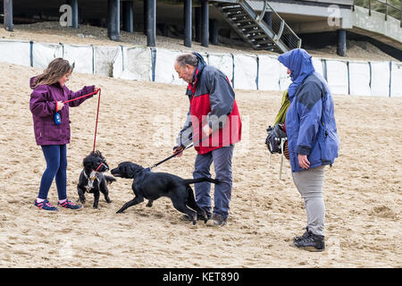 Dog walking - people walking their dogs on Fistral Beach Newquay. - Stock Photo