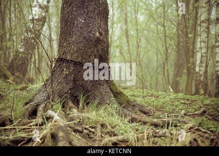 Iron chain bind around tree trunk - Stock Photo