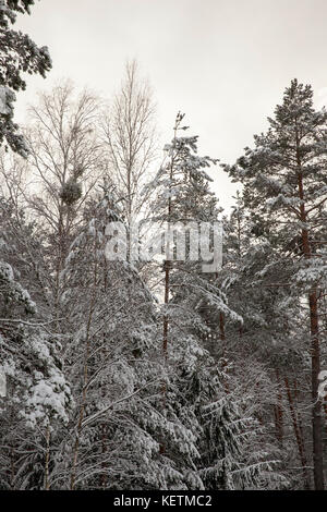 Snow in winter - Stock Photo