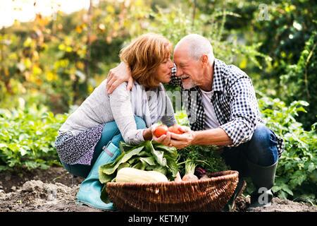 Senior couple gardening in the backyard garden. - Stock Photo