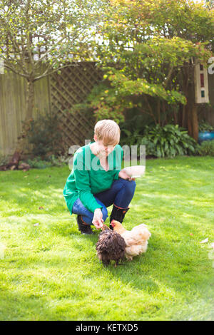 Lady feeding her bantam chicken pets - Stock Photo