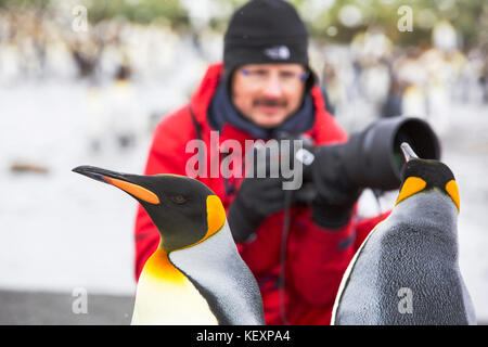 King Penguins at Gold Harbour, South Georgia, with passengers from an expedition cruise. - Stock Photo