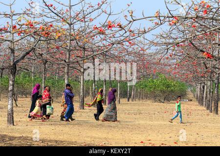 Rural People walking through silk cotton garden at Laurer Garh village on the bank of Jadukata River in Tahirpur - Stock Photo