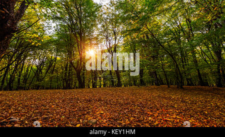 Autumn forest, fallen yellow leaves - Stock Photo
