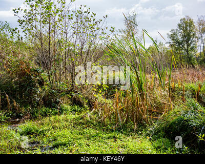 Boggy land, Hothfield Common nature reserve, Ashford, Kent - Stock Photo