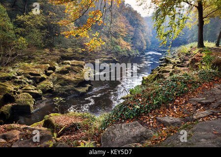 Autumn, Strid Woods and the River Wharfe, Bolton Abbey, Wharfedale, North Yorkshire - Stock Photo