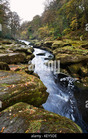Autumn, The Strid (River Wharfe), Bolton Abbey, Wharfedale, North Yorkshire - Stock Photo