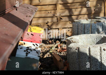 Busy bees - Stock Photo