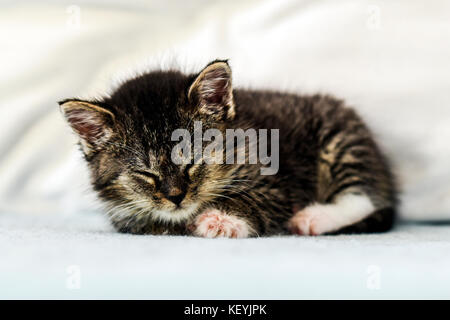A cute little kitten lying and sleeping on a couch at home. - Stock Photo
