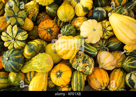 Mini pumpkins in different colors lying on the ground - Stock Photo