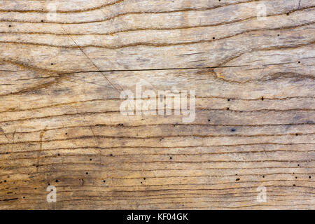 Photo of old oak wood texture with grooves and holes from the worm, suitable as a background - Stock Photo