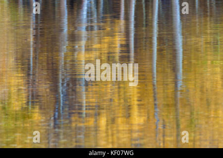 The reflections of the aspen trees in their fall foliage on the water surface to create an abstract pattern, Silver - Stock Photo