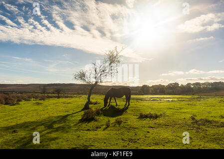 Godshill, Fordingbridge, Hampshire, UK, 25th October 2017. Glorious weather on the New Forest National Park where - Stock Photo