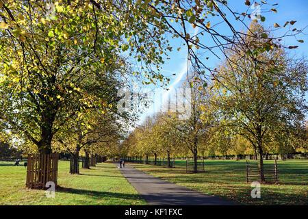 Bushy Park, SW London, UK. 25th October 2017. Stunning autumn colours on the Lime Walk in Bushy Park, London, on - Stock Photo