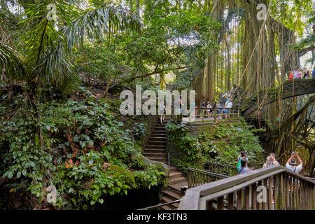Sacred Monkey Forest Sanctuary. Ubud, Bali, Indonesia. - Stock Photo