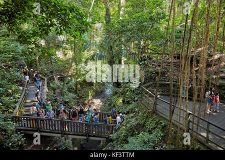 Wooden bridge with overgrowing trees in the Sacred Monkey Forest Sanctuary. Ubud, Bali, Indonesia. - Stock Photo