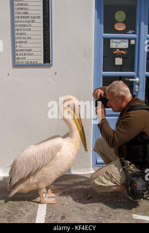 Tourist photographing a pelican at Mykonos-town, Mykonos, Cyclades, Aegean, Greece - Stock Photo